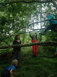 forest school livewild