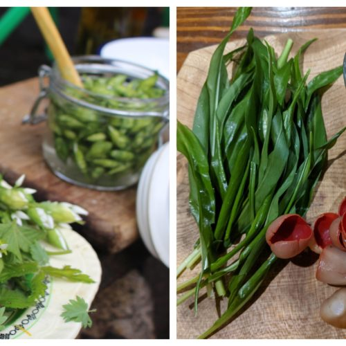 foraging courses manchester